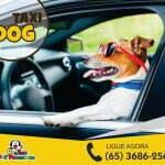 taxi dog